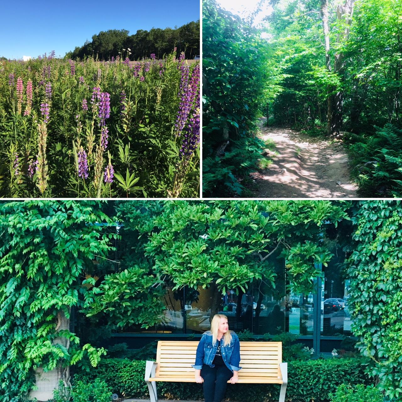 N.B. greenery