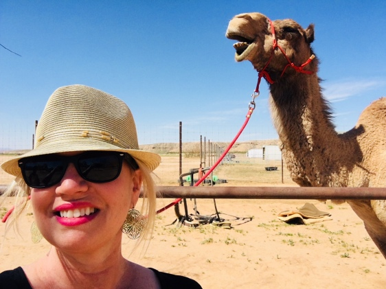 photo bombed by a camel