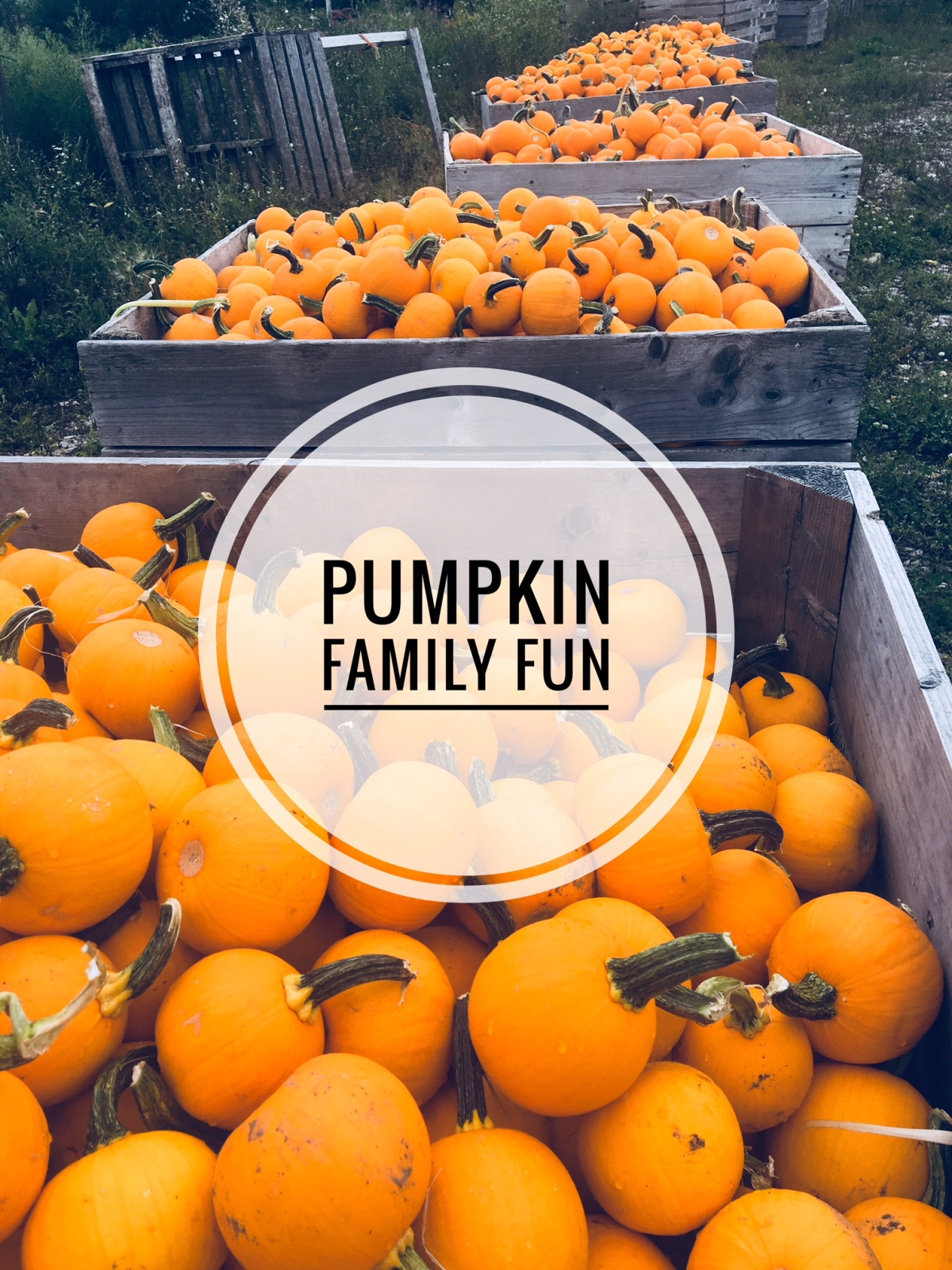 Pumpkin Fall Family Fun